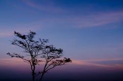 Stå det ensamma trädet i aftonen på Mae Moei National Park arkivfoto