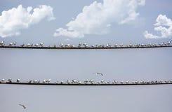 Stå för Seagulls Royaltyfria Bilder