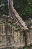 Stå högt, enorma träd och gallerier i Preah Khan Temple royaltyfria bilder