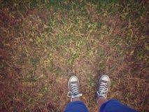 Stå i grönt gräs Royaltyfri Bild
