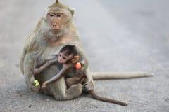 Stående av apan fotografering för bildbyråer