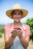 Stående av att le bonden som rymmer röda druvor royaltyfria foton