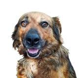 Stående av att le den roliga hunden Royaltyfria Bilder