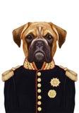 Stående av boxarehunden i militär likformig stock illustrationer