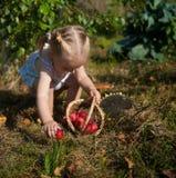 Stående av den blonda flickan med röda äpplen Arkivfoto