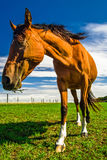 Stående av den bruna hästen i Tyskland royaltyfria foton