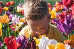 Stående av den caucasian pojken i ett färgrikt tulpanfält i Nederländerna, Holland arkivfoton