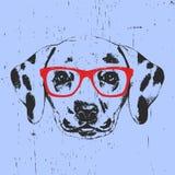 Stående av den Dalmatian hunden med exponeringsglas stock illustrationer