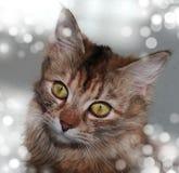 Stående av den gråa kattungen med stora gröna ögon på den vita suddiga bakgrunden royaltyfria foton