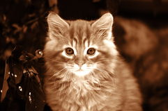 Stående av den gulliga katten Royaltyfria Foton