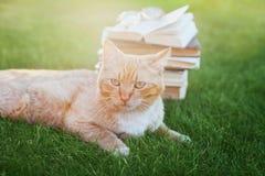 Stående av den gulliga katten med boken royaltyfria foton