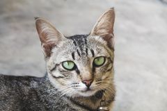 Stående av den gulliga katten fotografering för bildbyråer