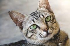 Stående av den gulliga katten arkivfoton