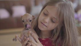 Stående av den gulliga lilla flickan som kramar upp och kysser hennes lilla bruna chihuahuahundslut Barnet som spenderar tid med stock video