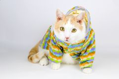 stående av den gulliga vita och röda katten royaltyfri bild