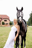 Stående av den härliga blonda kvinnan och grå färghästen på bröllopet Arkivbild
