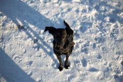 Stående av den härliga lilla svarta hunden och att se kameran som sitter i en solig äng royaltyfria bilder