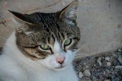 Stående av den ilskna katten royaltyfria foton