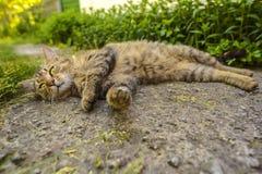 Stående av den inhemska katten Arkivbilder