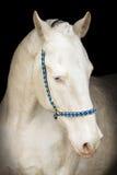 Stående av den isabella hästen arkivfoto