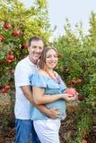 Stående av den lyckliga familjen i pomegrateträdgården Makeinnehavhänder på magen av hans gravida fru med mogen frukt fertilitet Arkivfoto