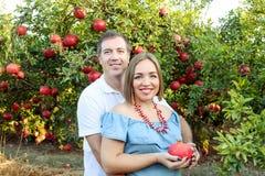 Stående av den lyckliga familjen i pomegrateträdgården Makeinnehavhänder på magen av hans gravida fru med mogen frukt fertilitet Royaltyfri Foto