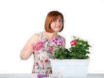 Stående av den nätta medelåldersa kvinnan som att bry sig för houseplants Fotografering för Bildbyråer