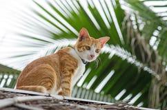 Stående av den orange katten Royaltyfria Bilder