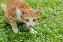 Stående av den orange katten Arkivbilder