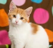Stående av den små katten arkivfoton