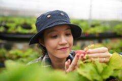 Stående av den stolta unga trädgårdsmästaren Arkivfoton