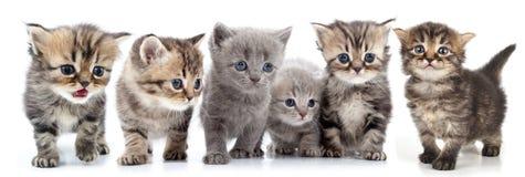 Stående av den stora gruppen av kattungar mot vit bakgrund Royaltyfri Foto