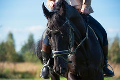 Stående av den svarta dressyrhästen med ryttaren Arkivfoto