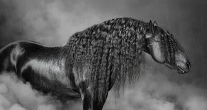 Stående av den svarta Frisianhästen med lång man i röken Fotografering för Bildbyråer