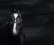 Stående av den svarta hästen med hjärtafläcken Unigue färgade Fotografering för Bildbyråer