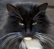 Stående av den svarta kattungen Royaltyfri Fotografi