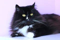 Stående av den trevliga svarta katten arkivfoto