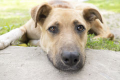 Stående av den unga hunden med uttrycksfulla ögon Arkivfoto