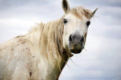 Stående av den vita hästen på en bakgrund för molnig himmel Royaltyfria Foton