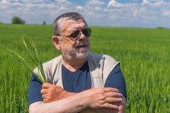 Stående av det ukrainska höga bondeanseendet inom omoget skördfält och att ta flera spikelets arkivbild