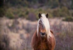 Stående av en brun häst i fältet arkivbilder