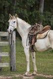 Stående av en cowboyhäst som är klar för arbete Arkivfoton