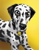 Stående av en dalmatian på en gul bakgrund Royaltyfri Bild