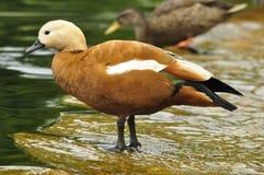 Stående av en fågel Royaltyfria Bilder