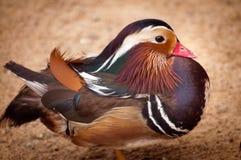 Stående av en fågel Arkivbilder