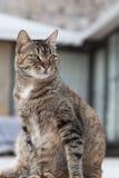 Stående av en fet katt som ligger på den gamla staden dubrovnik Arkivbild