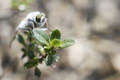 Stående av en fluga Royaltyfria Foton