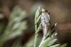Stående av en fluga Arkivfoton