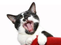 Stående av en gäspa katt Royaltyfria Bilder