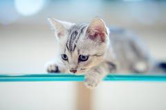 Stående av en grå randig kattunge royaltyfri bild